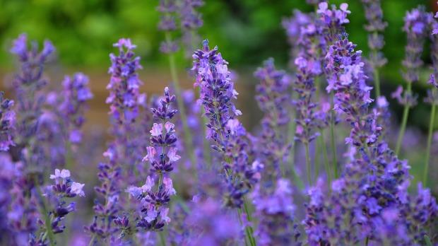 blue-flower-812739_12801